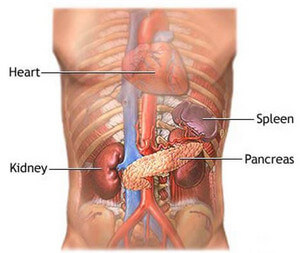 spleen pain - location, causes and treatment, Skeleton
