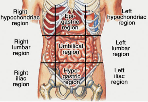 liver pain location pictures causes symptoms diagnosis liver is located in the right upper region photo ccuart Images