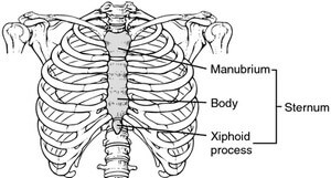 Location and anatomy of the breastbone picture