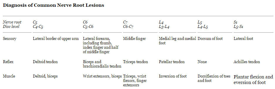 Diagnosis of Common Nerve Root Lesions image